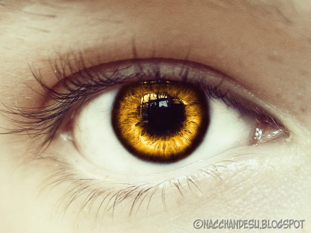 yellow eyes - photo #9