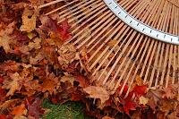 Raking Leaves Is Aerobic Exercise