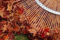 Raking Leaves Is Aerobic Exercise