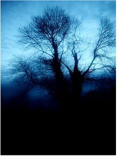 Dark Art Picture Style