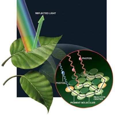 Resultado de imagen de Las cianobacterias carecían por completo de la compleja habilidad de la fotosíntesis durante la primera mitad de la historia de la Tierra