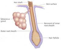 Anti Acne Herbal Skin Care