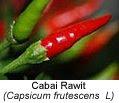 cayenne pepper Prevent Hair Loss