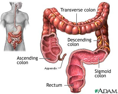 Is the Part of the Large Intestine Colon