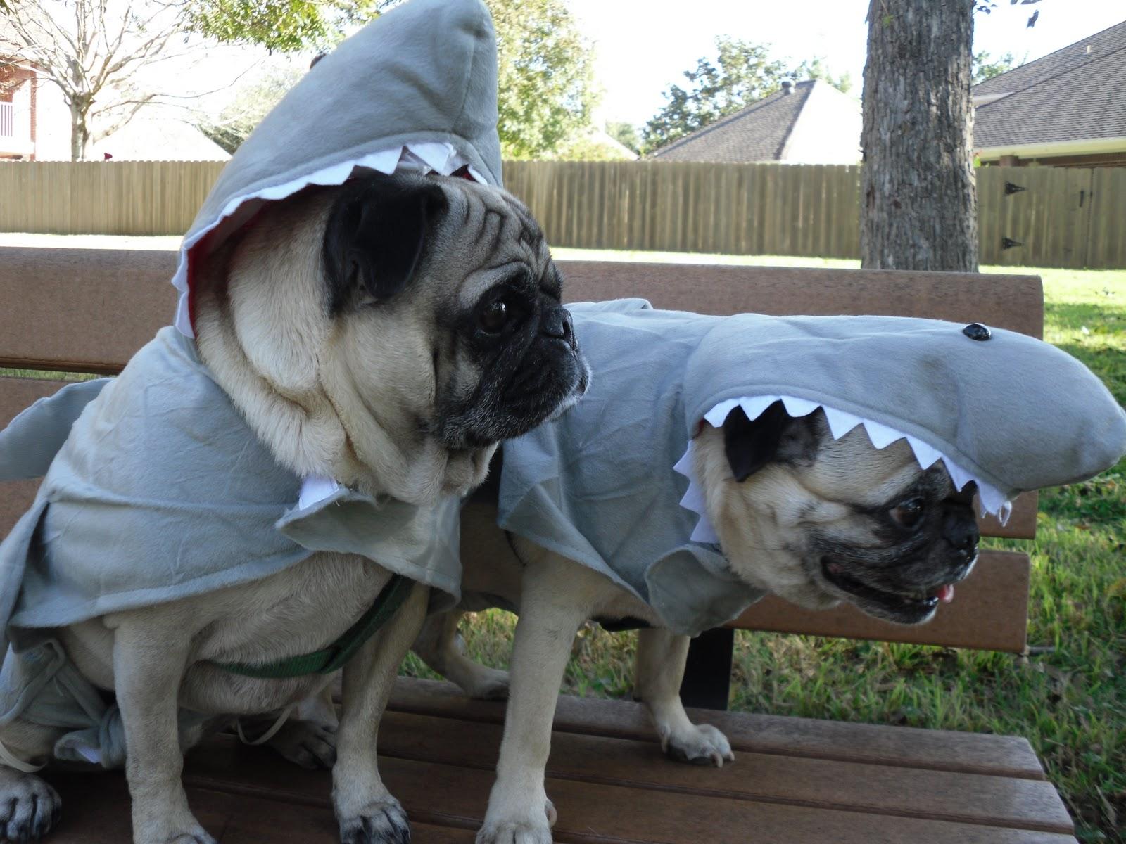 http://2.bp.blogspot.com/_xCZXXM23n7k/TMB0uqQagFI/AAAAAAAAB0I/EHss7fI6lGY/s1600/Halloween.jpg