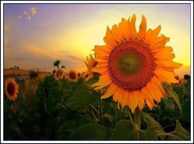 Ese sol que hace Maravilla