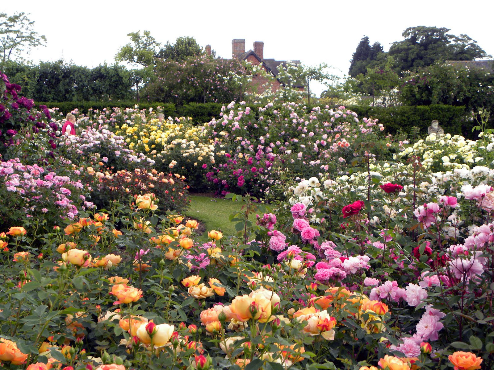 Backyard rose garden - Who Could Possibly Have Enough Roses In A Garden To Make The Landscape