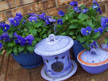 Pots of Blue pansies