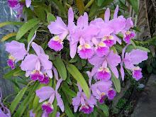 Flores de mi Pueblo