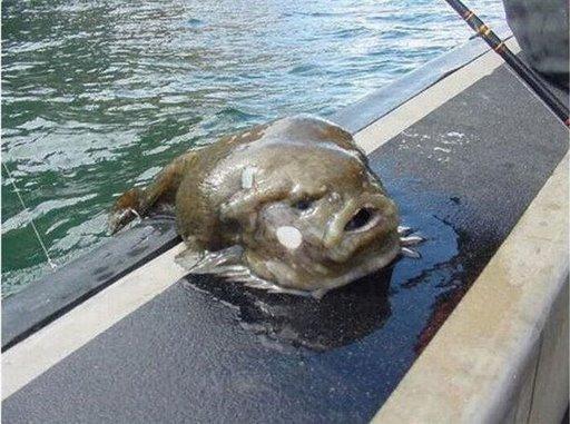 Stuffington post thalassophobia for Ugly fish blob
