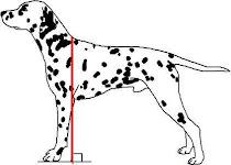 La altura de un perro.