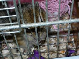 il nostro scoiattolino: Fiore