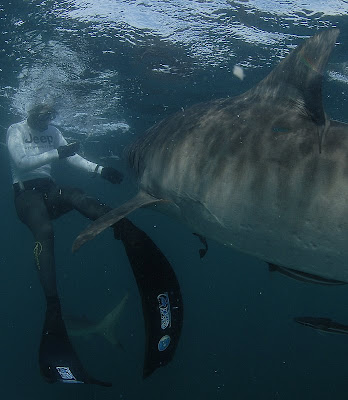 Freediver holds courses in Shark Park 1