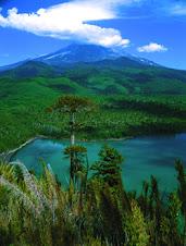 Parque Nacional Conguillio: creado como tal en 1950 : Posee una superficie de 60.800 hectáreas.