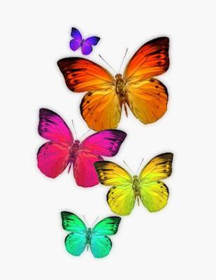 Farfalla simbolismo delle farfalle for Foto farfalle colorate
