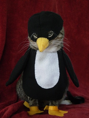 [penguin+cat.htm]