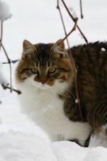 Tigrotto nella neve
