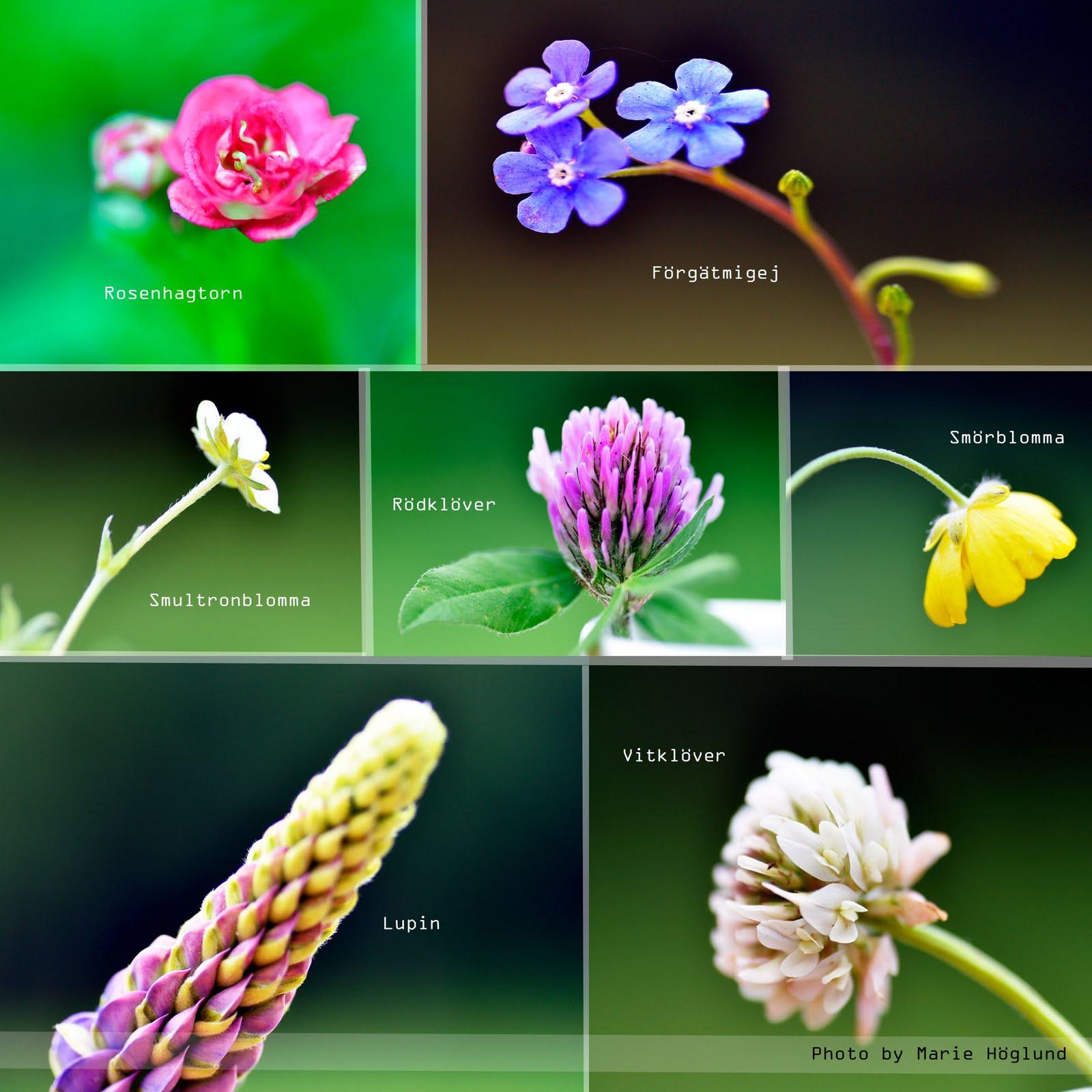 blommor olika sorter