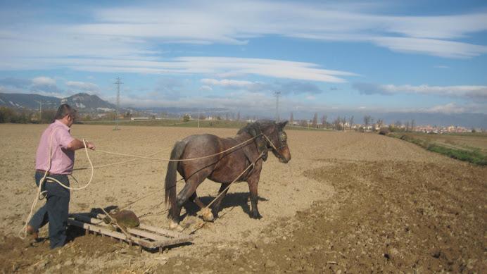 Passant el rascle després de la sembrada