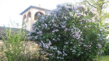 Lilà florit