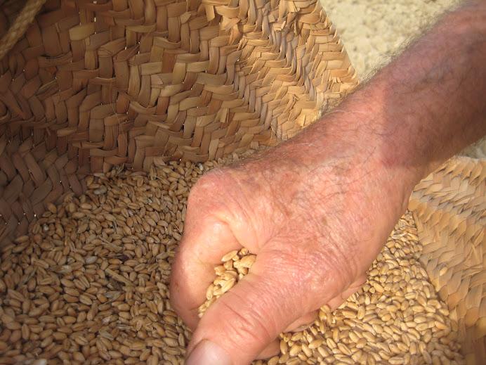 Grapat de blat