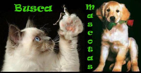 Busca Mascotas