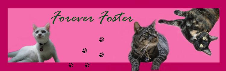 Forever Foster