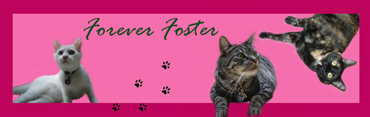 Forever Foster