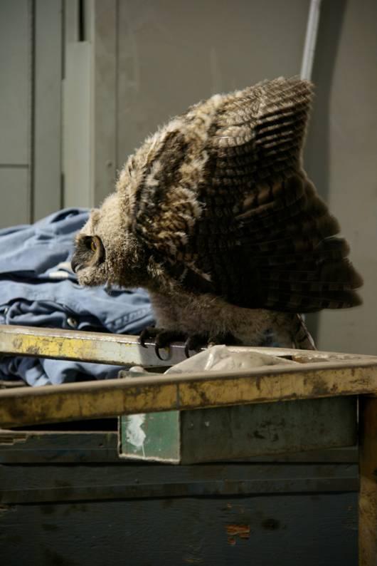 [owl1.aspx]