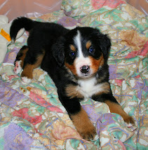 Scout at 4 weeks old