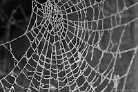 http://photos.jibble.org/[...]: Frosty Spider Web