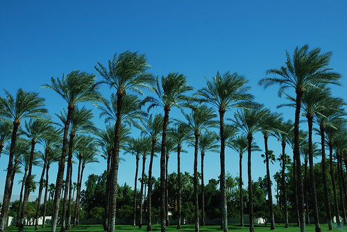 Palm Springs by Mispahn