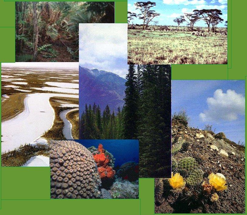 El mundo y sus ecosistemas tipos y clasificac n de los for Plantas que hay en un vivero
