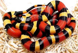 Pequeña y aparentemente inofensiva serpiente...