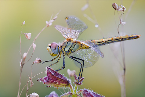 Image Gallery pretty dragonflies