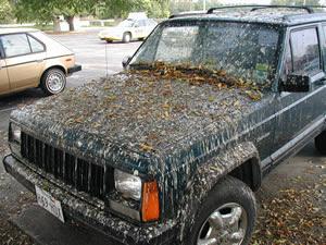 Bird-Poop-Art-Car3.jpg