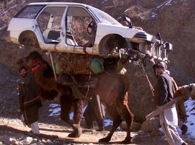 car+on+camel.JPG