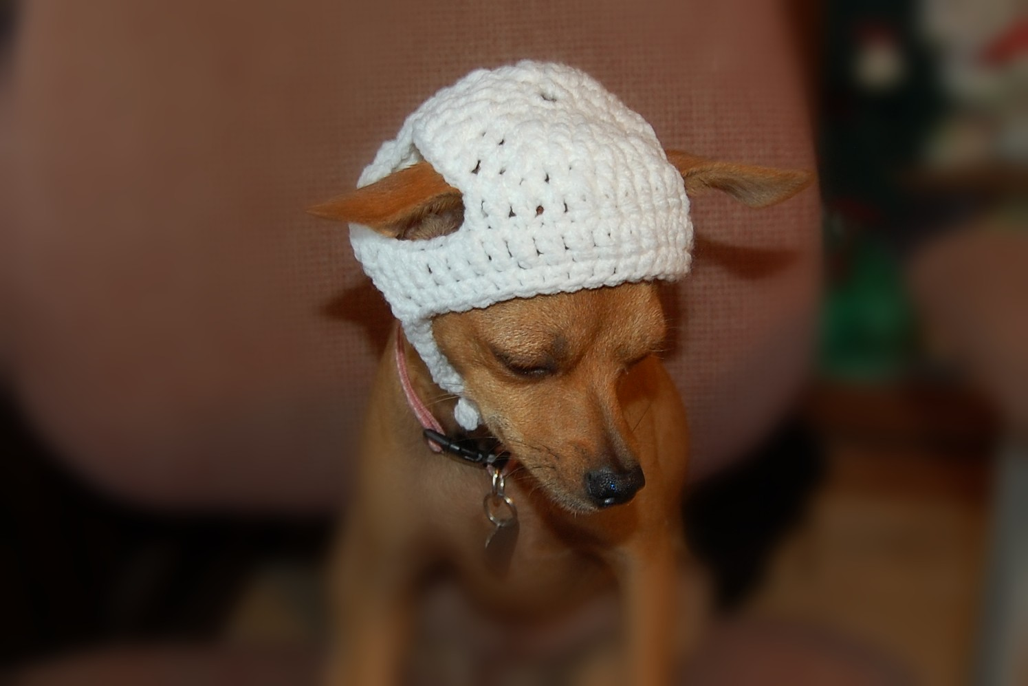 DOG SWEATER - Linda's Chihuahua Version - Free crochet patterns