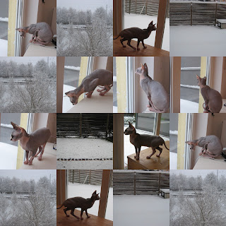 Dragonheart's First Snow