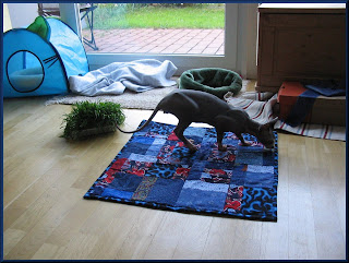 Dragonheart on his quilt