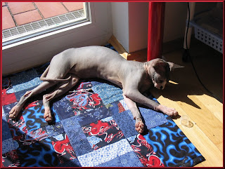 Dragonheart enjoying the sun on his Bizzy for Gizzy Quilt