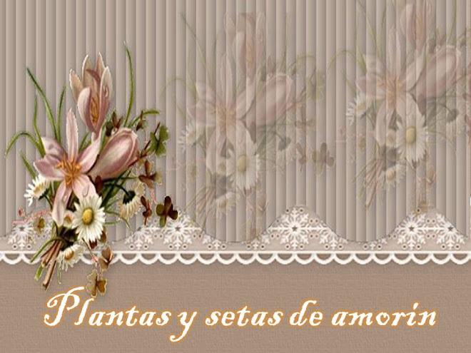 plantas y setas de amorin