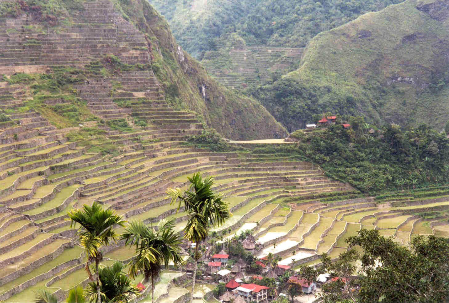 essay about philippines environment ngos