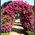 ogród różany  (Planten un Blomen Hamburg)