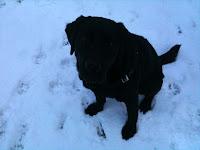 sumo in snow