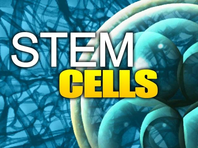 Clearly, adult stem cells have shown more results, without destroying life.