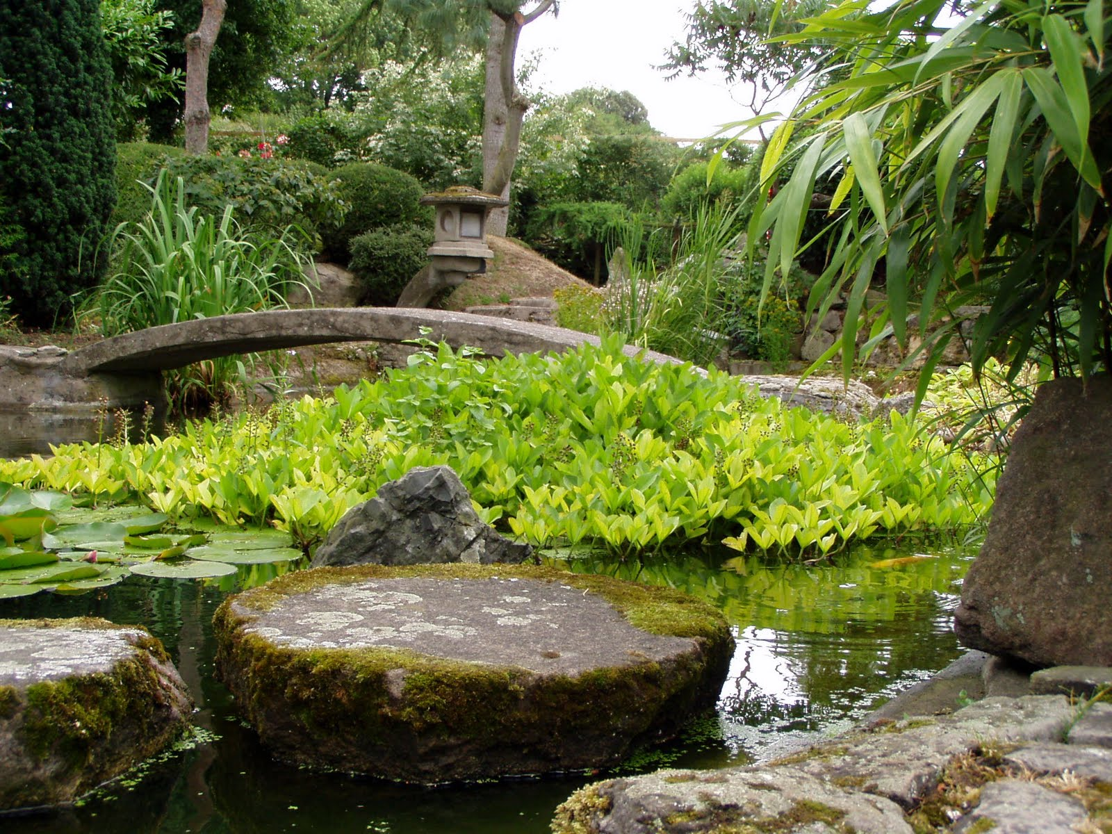 Say a little say a lot for Japanese meditation garden