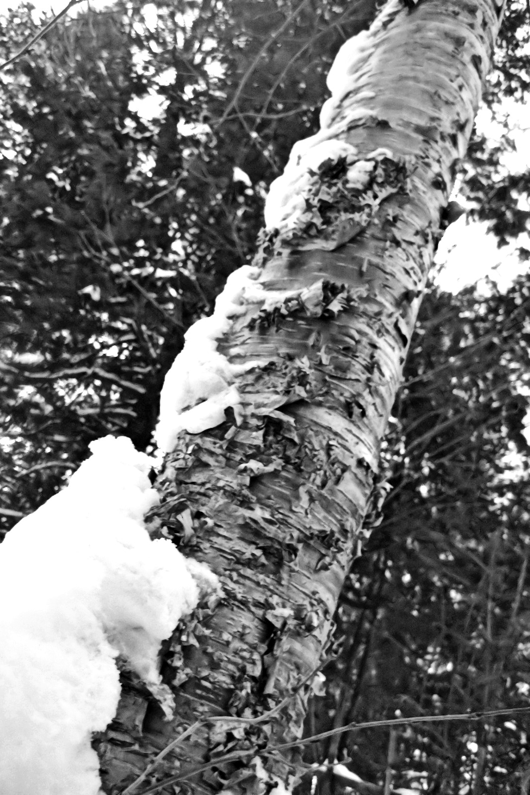 Natures Food Patch Market St Pete Fl