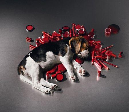 Les marques qui testent sur les animaux