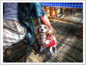 愛犬と一緒に焼きハマを満喫!